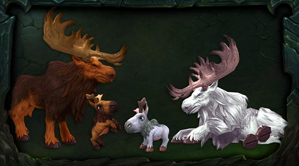 Moose calves in Legion