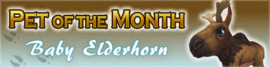 Baby Elderhorn - Pet of the Month June 2018