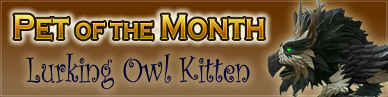 Lurking Owl Kitten - Pet of the Month September 2016