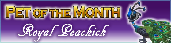 Royal Peachick - Pet of the Month May 2018