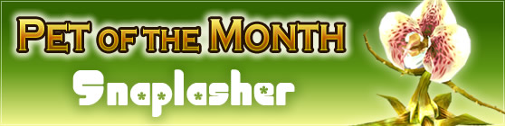 Snaplasher - Pet of the Month April 2017
