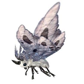 Ashwing Moth