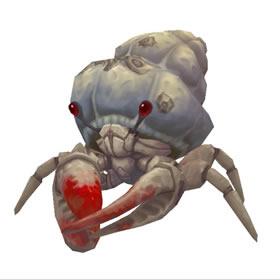 Barnacled Hermit Crab