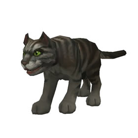 Black Tabby Cat