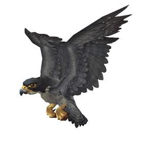 Corlain Falcon