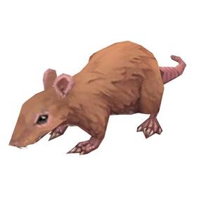 Dig Rat