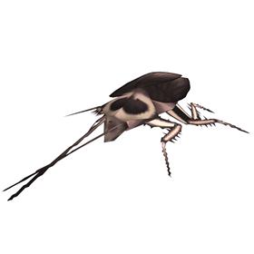 Experimental Roach