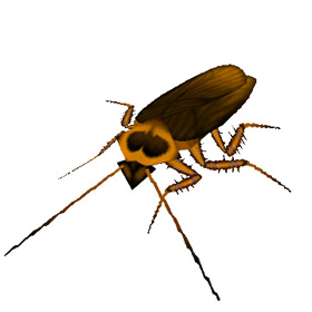 Irradiated Roach