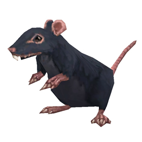 Redridge Rat