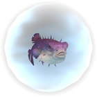 Purple Puffer